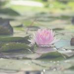 Amor-próprio: Entre a autoestima e a autocompaixão